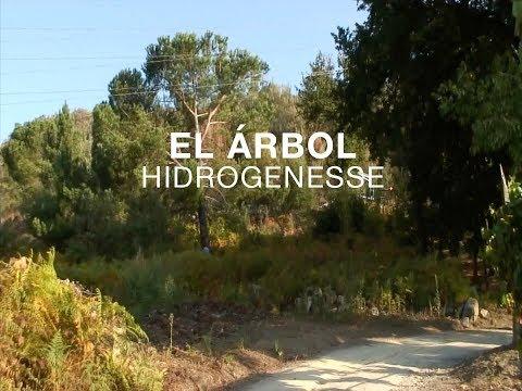 Hidrogenesse: El árbol (con imágenes de «Canedo», de Vázquez/Arrieta)