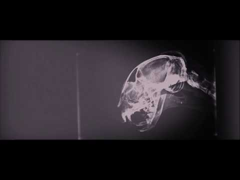A Veces Ciclón - Devalo (Video Oficial)