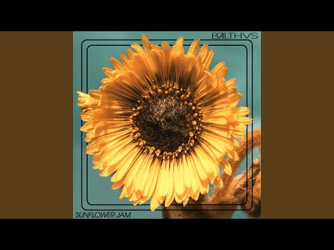 Sunflower Jam