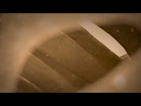 Polanco - Música para Filodendros ( Versión Estéreo )
